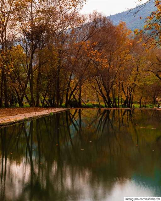 Magical season 🍁🍂....... landscapephotography naturephotography... (Akkar)
