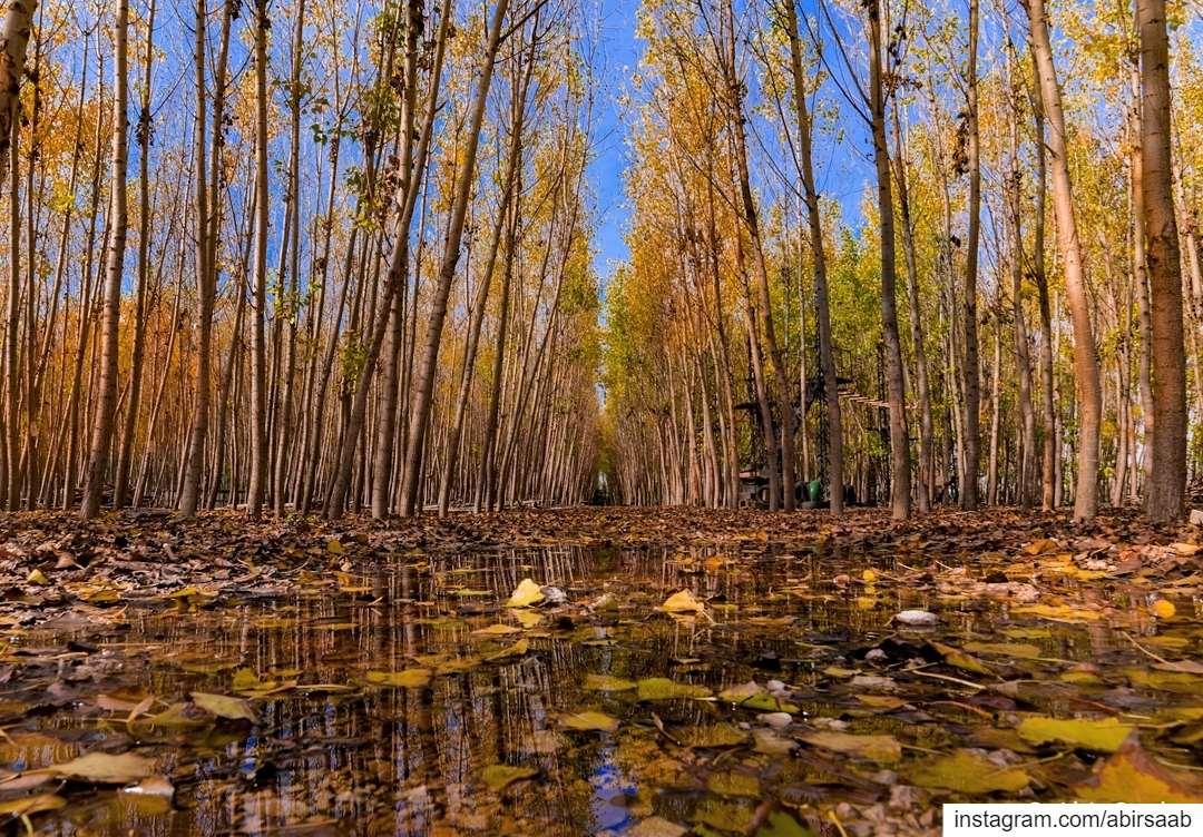 Light breeze,Colorful leaves,Bare trees,It must be Autumn!! . . . ... (Besten El Hor - بستان الحور)