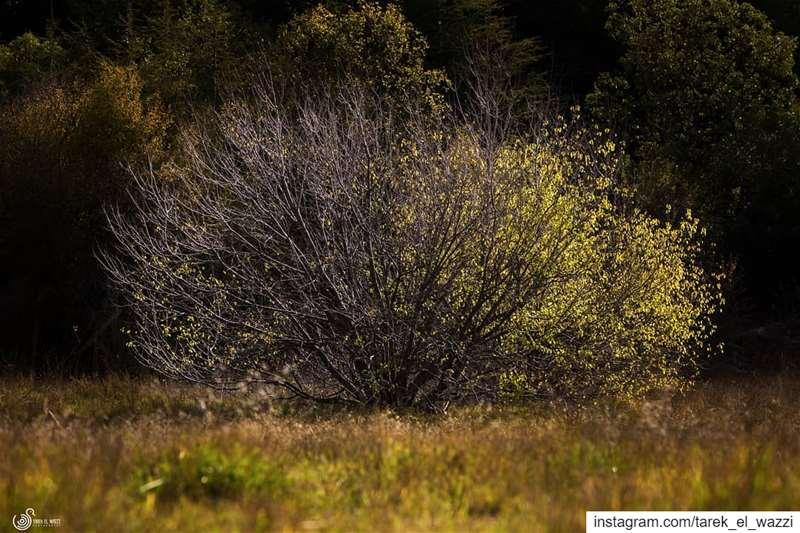 Autumn 🍂 Lebanon nature landscapephotography landscape canonlebanon...