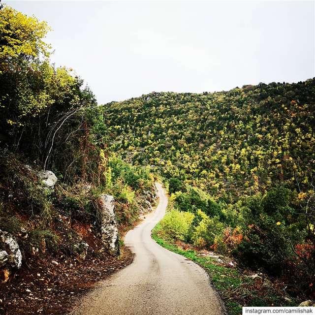 autumn autumnvibes🍁 lebanon mountlebanon colors trees path road nature... (Dlebta, Mont-Liban, Lebanon)
