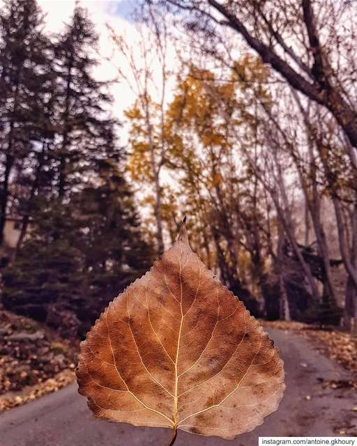 Let things go...🍁🍂.... Lebanon  autumn  leaves  Lawyer  Lawyerblog...