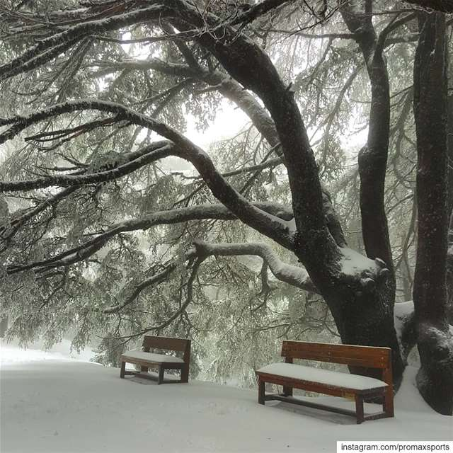Join our Snowshoeing event this Sunday, January 05 to Shouf Cedar Forest... (Al Shouf Cedar Nature Reserve)