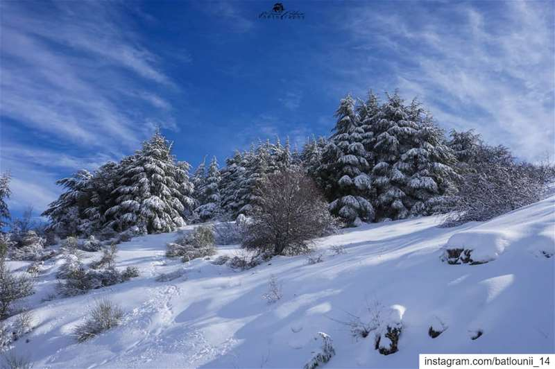 The charm of the snow ❄️───────────────── shoufbiospherereserve sbr ... (Ain Zhalta-Bmohray Cedar Forest)