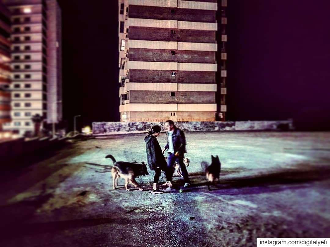 Nightwalkers....... doggydaycare doggy nightlife ... (Beirut, Lebanon)