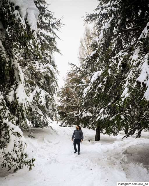 Looking for white walkers ❄️ ⚔️  snow  forest  snowday  cedar  woods ... (Qanat Bakish, Mont-Liban, Lebanon)