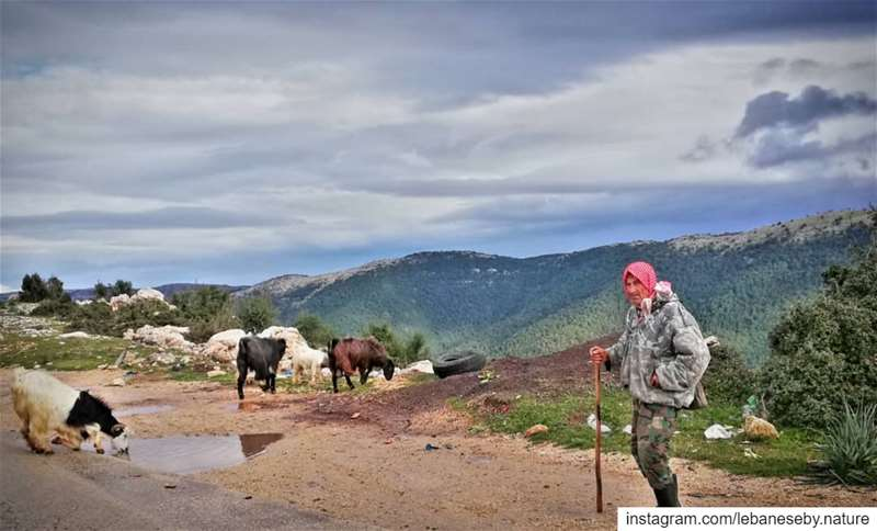 I'm Never Tired of  winter.. shepherd  oldman  strongman  proudofhim ... (Al Qubayyat, Liban-Nord, Lebanon)