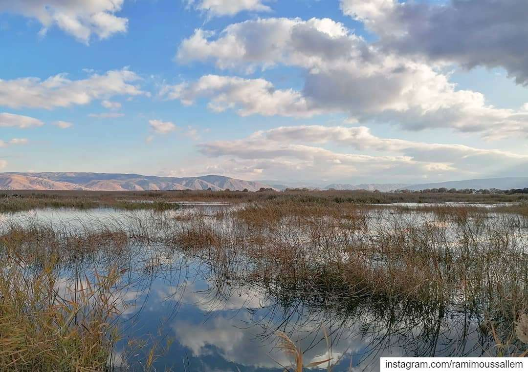 wetlands ammiq reflection water land lebanon clouds bekaa ... (Aammiq, Béqaa, Lebanon)
