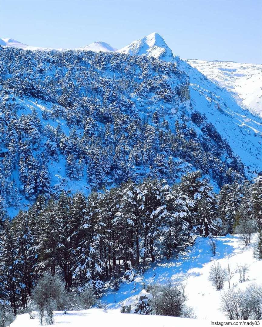 Mighty Cedars ❄ ... ... backcountryskiing lebanon snow ski instagood... (Hadath Al Jubbah, Liban-Nord, Lebanon)