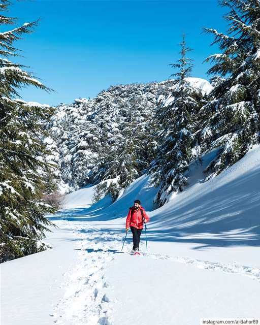 Make time for the great outdoors ☀️❄️....... landscapephotography... (Al Shouf Cedar Nature Reserve)