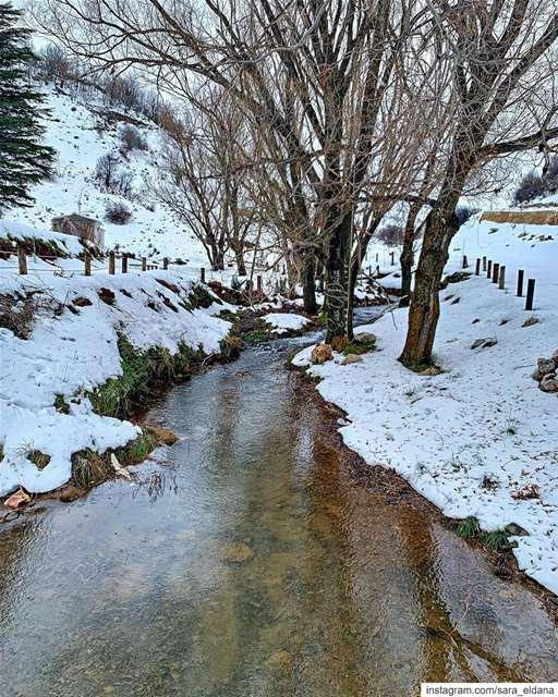 Let's wander! ❄️ (El Laklouk, Mont-Liban, Lebanon)