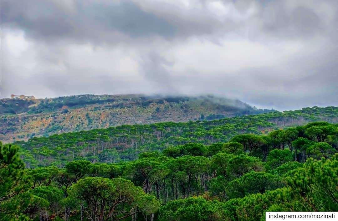 بإنتظار العاصفة.. =========================== mountains landscaping ... (Jezzîne, Al Janub, Lebanon)