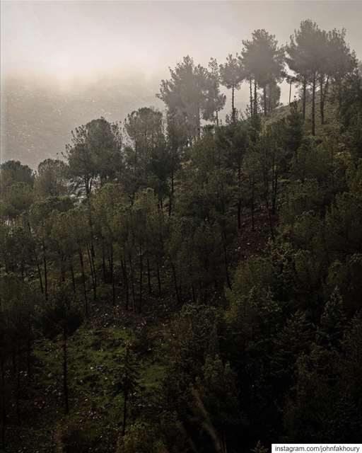 Beyond the fog lies... (Ebel es Saqi marj 'youn)