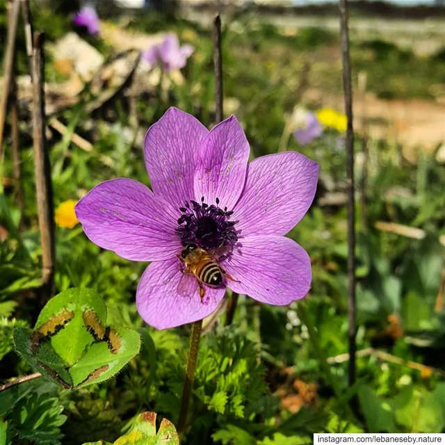 EarlySpring beautifulNature.. Flowers green colorful spring ... (Akkar)