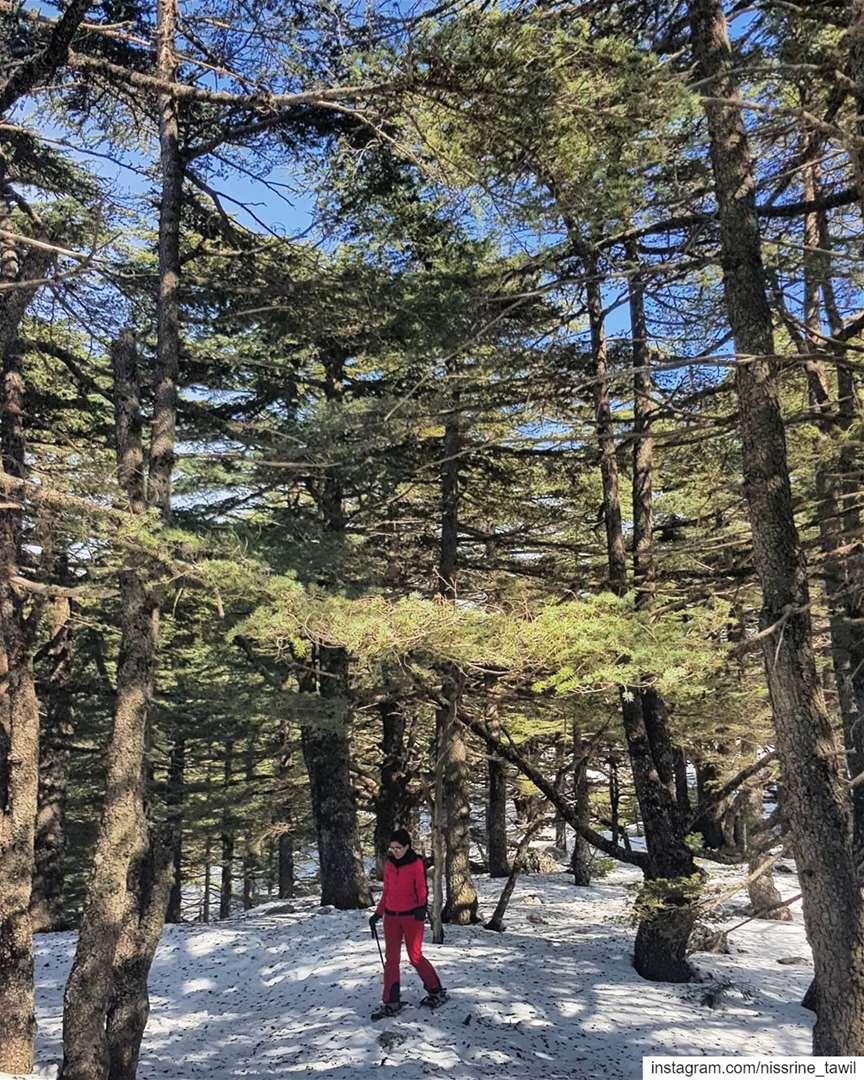 cedars reserve ... (Al Shouf Cedar Nature Reserve)