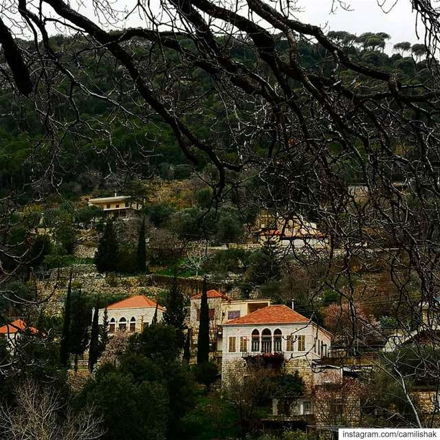 dlebta mountlebanon mountain nature trees weather winter cold village... (ضيعة دلبتا)
