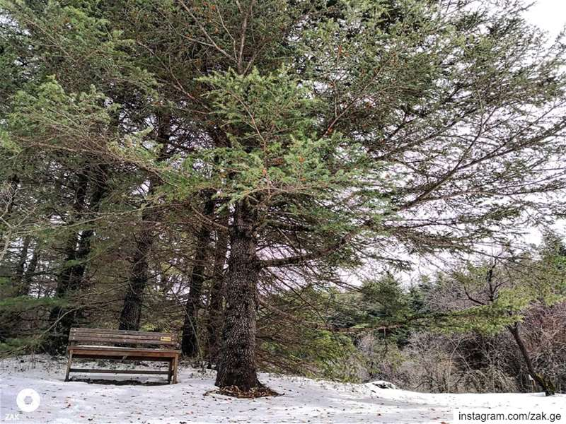 Winter seat.........  snow  house  livelovechouf  livelovebeirut... (Lebanon)