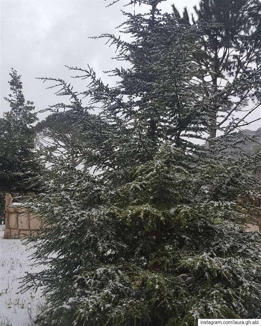 snowy day treescape pinetrees ceder backyard steps nature... (Bzébdîne, Mont-Liban, Lebanon)