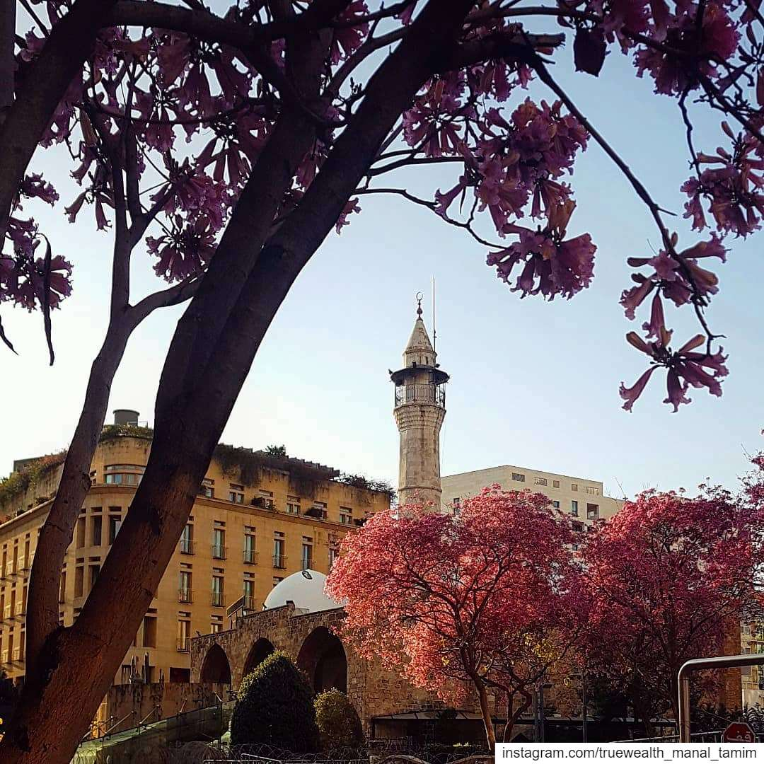 Unmasked Mother Nature ready for Spring..📍Never confined my BeirutMarch... (Downtown Beirut)