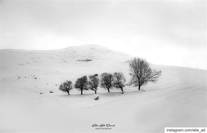 Mother and children 🌳 fighting the last tough days of winter. winter ... (Kfardebian,Mount Lebanon,Lebanon)