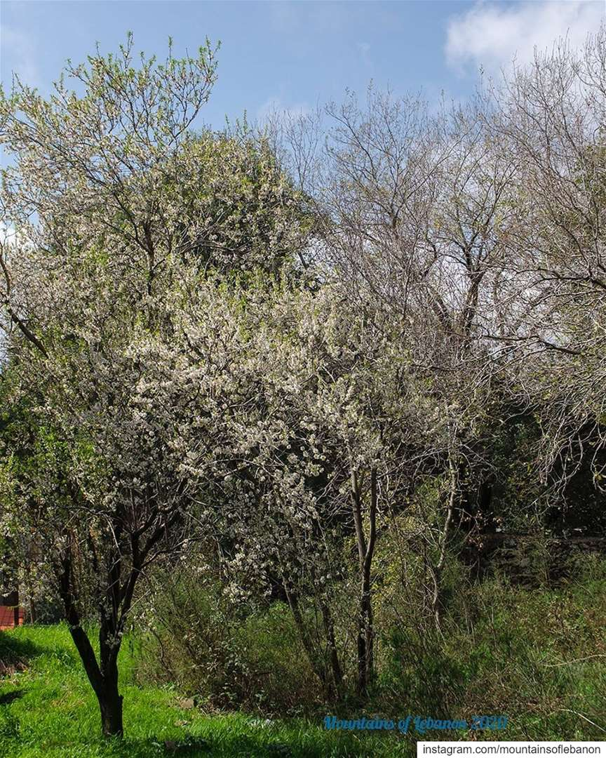 Spring moods...... roadtrip explore livelovelebanon natgeo ... (Ballouneh, Mont-Liban, Lebanon)