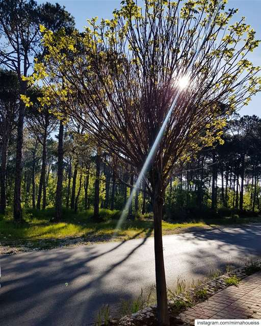 Nothing can dim the light that shines from within ☀️🌄🍀🌳 sunlight ... (Bois De-Boulogne, Mont-Liban, Lebanon)