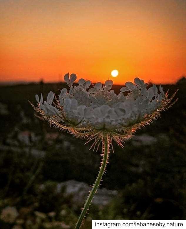 You can never stop the sunsetBut you can stop the coronavirus... (Al Qubayyat, Liban-Nord, Lebanon)