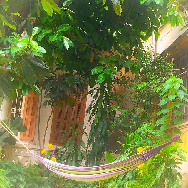 Hammock and indoor garden: remains of a vanishing lifestyle 🌺 Sabah el Kheir ya Beirut ☀️☕️🇱🇧! (Geitawi)
