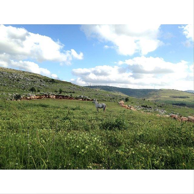 stunning sight! simplyaroun Lebanon Beauty Springtime