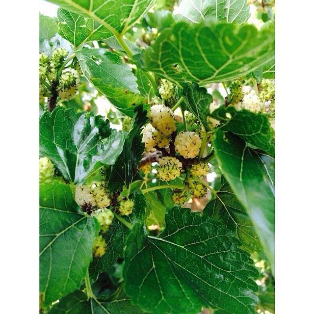 Berries. simplyaroun