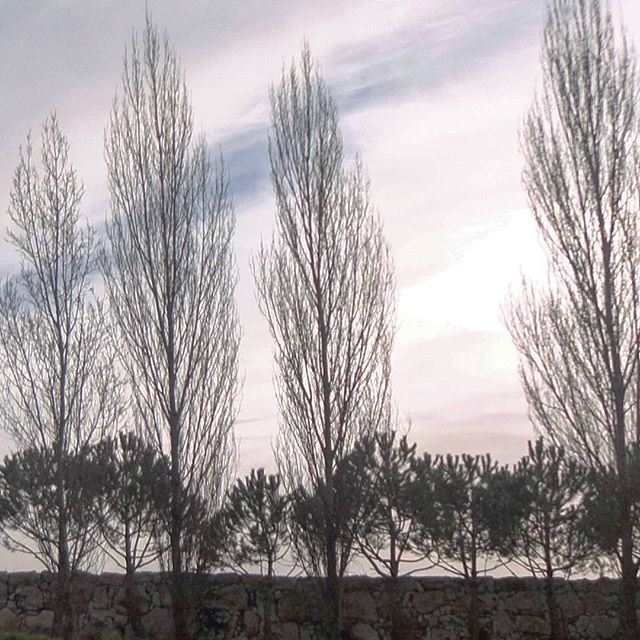 nature treescollection wintertime wintermood (Anaya - Saint Charbel)