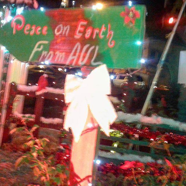 peaceonearth christmas decoration noelwish (Zahle, Lebaon)
