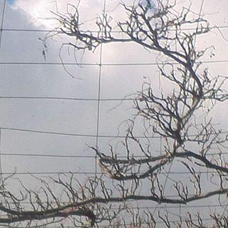 nakedbranches branchesnues autumnstyle autumnsky tristesaison naturemorte deadlynature cloudysky