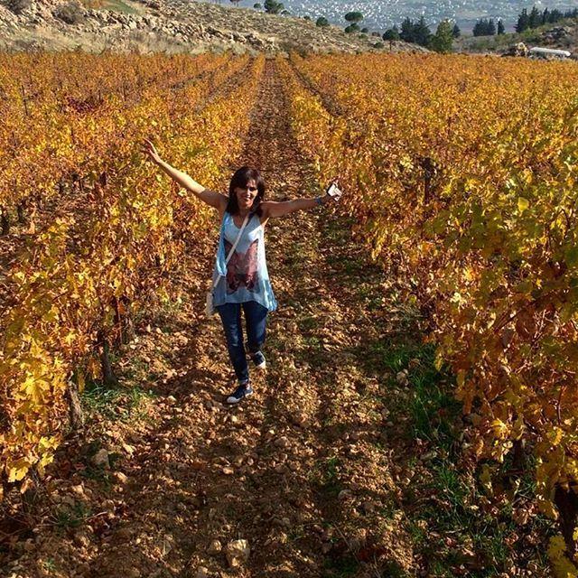 autumncolours yellowleaves chateaukefraya terroir vigne