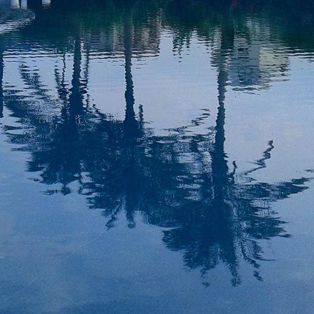 reflection water palmtrees