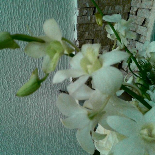 flowers loves_flowers