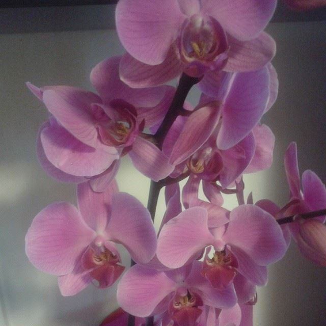 orchidée flowers loves_flowers_nofilters nofilter
