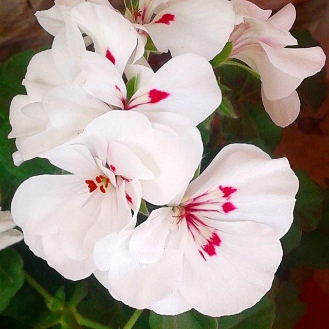 flowers loves_flowers fleurs springmoments