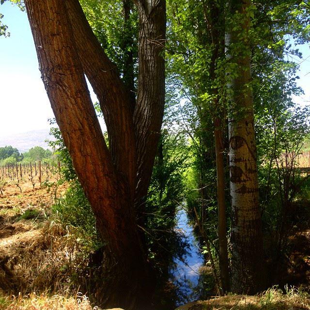 fontaineriver riviere water treesplaingarden plaine forestforetruisseau discoverlebanonsnature verdure