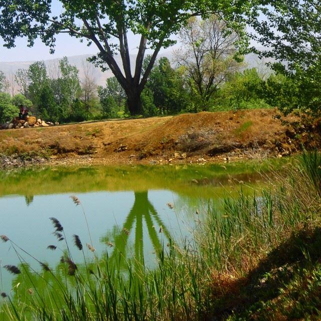 reflection forestpark lakewatertreesdiscoverlebanon whatsuplebanon loves_lebanon