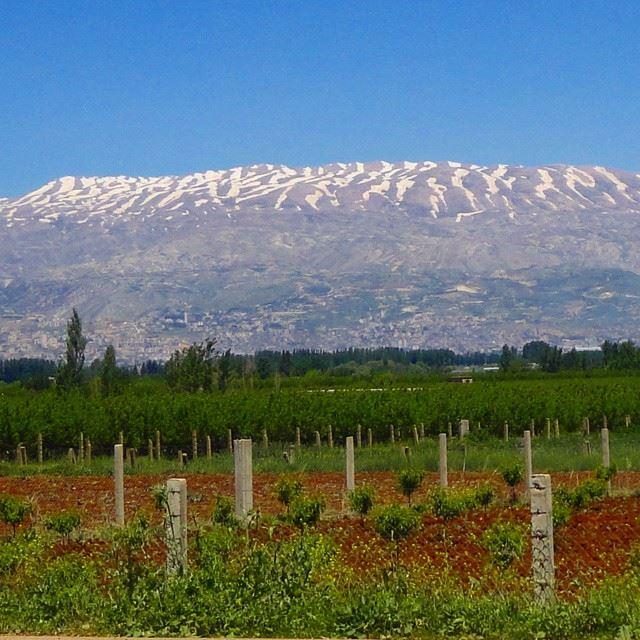 mountain snow plainspringmomentsverdure (Anjar)