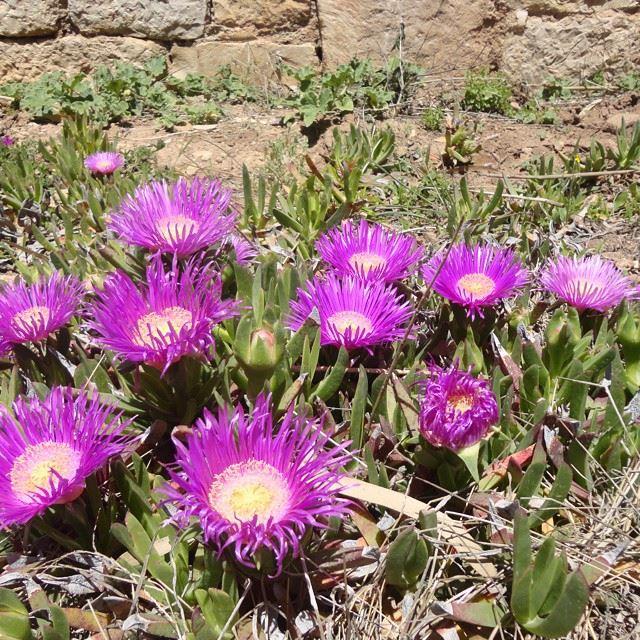 nofilter flowers natureloves_flowers springspirit