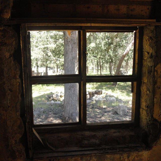loves_abandoned abandonnedplace abandoned deserted housewindows_aroundtheworld forestarchitecture treesgarden