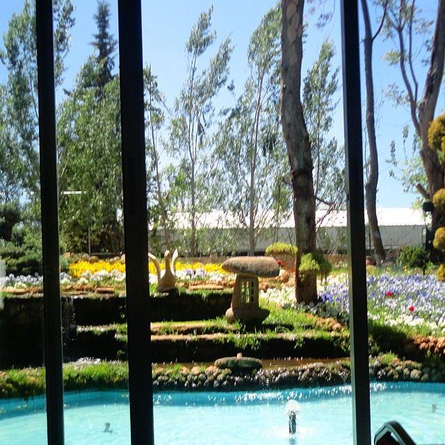 garden orchard pool waterflowers (Shams Restaurant - Anjar)