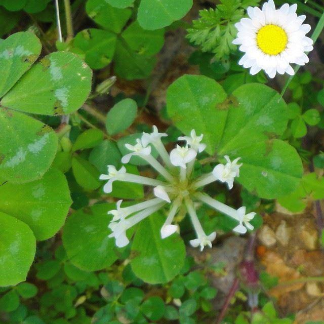 garden orchard flowers springspirit