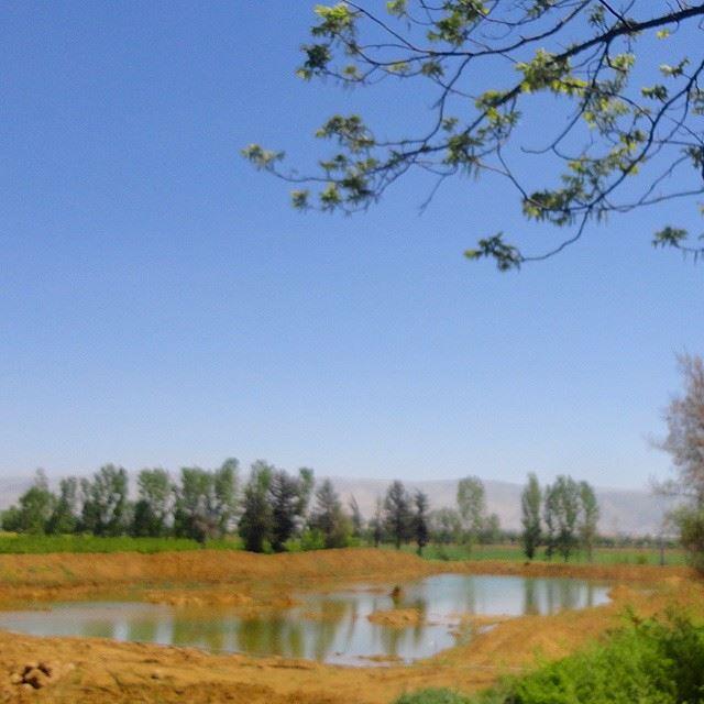 discoverlebanonsnature discoverlebanon lakelacwaternatureloves_lebanon whatsuplebanon reflection treesforestpark