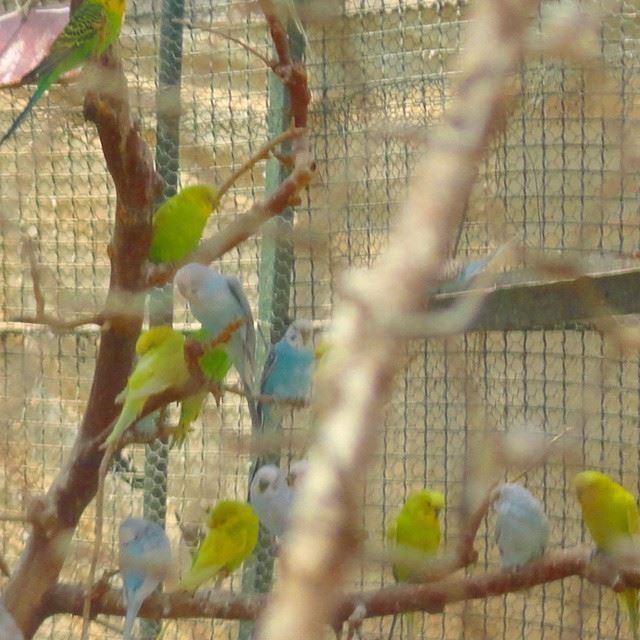 birds cageoiseaux colorful
