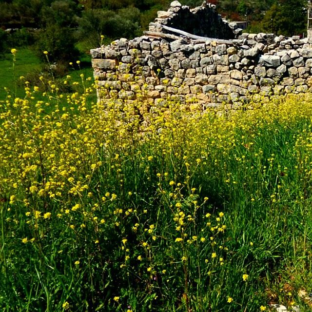 ruin ruines old stonehouse stonehome garden stonewalls abandoned springspirit springmoments