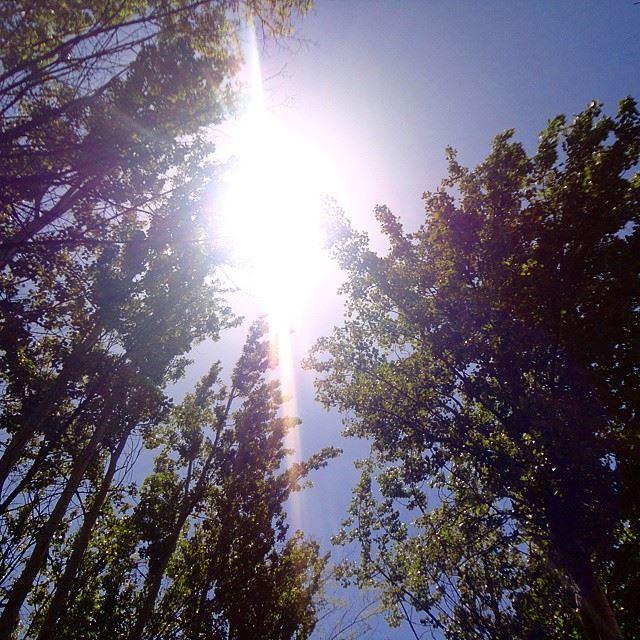 sunsunlightsforest treessky