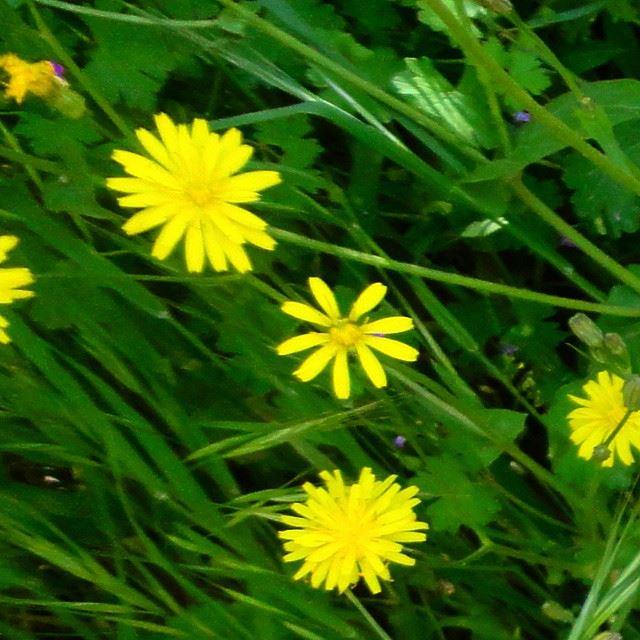 flowers loves_flowers_ natureshots garden