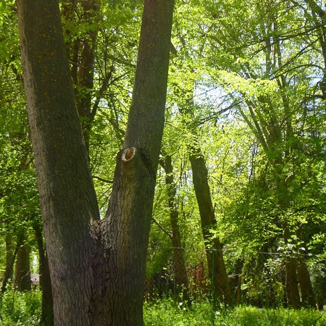 forestpark treesnatureshots garden